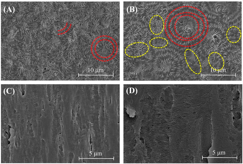 Micrographies MEB de la microstructure sphérolitique d'échantillons de différents PVDF